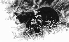 Black Bear by Consie Powell