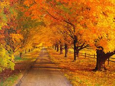 Maple Trees Photo:  This Photo was uploaded by liddawolfe. Find other Maple Trees pictures and photos or upload your own with Photobucket free image and ...