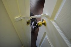 Door Buddy Gets A Review From PetPav Magazine