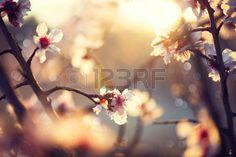 sceneries: Natura bella scena con albero fiorito e il chiarore del sole