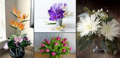 Best Happy Birthday Flowers According to Months Best Shrubs For Shade, Flowering Shrubs For Shade, Shade Loving Shrubs, Shade Shrubs, Happy Birthday Flower, Birthday Bouquet, Sky Pencil Holly, June Flower, Morning Glory Flowers