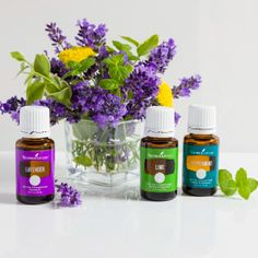 Purification Essential Oil | Young Living Essential Oils