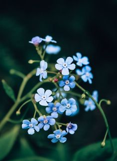 167 Things That Are Blue In Nature – Thing Database Small Flowering Plants, Cute Garden Ideas, Light Blue Flowers, Rose Trees, Balloon Flowers, Focus Photography, Garden Quotes, Gardening Gloves, Backyard Landscaping