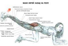 упражнения для средней ягодичной мышцы: 7 тыс изображений найдено в Яндекс.Картинках