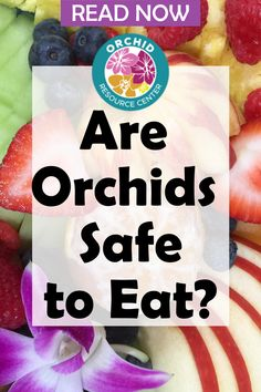 When you visit tropical places, you may find your dishes garnished with pretty orchid flowers. But, are these orchids safe to eat? Discover if orchids are safe to eat and which ones are safe to use as a garnish and part of 3 exciting recipes.