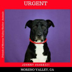 THIS BOY NEEDS HIS HERO NOW! PLEASE HELP SAVE THIS BOY!  Hes not doing well in a shelter environment and has been signed off to be put down.  per shelter: 12/16/16 13:13 12/1/16 The dog has been present in the shelter for an extended time past review date. The dog is deteriorating (ie. losing weight) living in the kennels and it is inhumane to continue to house the dog in the shelter. No rescue/adoption has occurred. Recommended PTS to prevent further stay in the shelter and overcrowded…