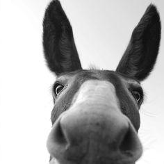 Donkey, Sardegna, Italy by Stefano Aliquò,