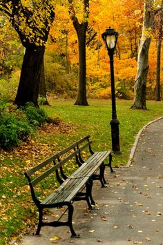 New York City in the fall ~ park bench and lamp post.