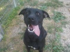 Meet Liberty in Petfinder's Adopt-A-Less-Adoptable-Pet Week Gallery, I am sweet, loving and playful. I was rescued from a high kill shelter and I am now ready for my new chance to have a loving home . I am very smart and willing and wanting to please. I am housetr