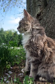 """""""A cat improves the garden wall in the sunshine, and the hearth in foul weather."""" --Judith Merkel Riley"""