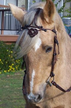braided kangaroo leather headstall, ALAMAR KNOT: In traditional Old California horse training, when a horse had graduated to become a finished bridle horse, the alamar knot was tied from two coils of a mane hair mecate draped over the horse's neck and the knot worn on the horse's chest to denote him as a bridle horse