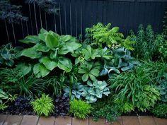 Des plantes pour un jardin à l'ombre