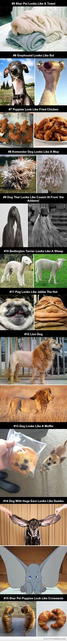 Dogs That Look Like Other Things Funny Animal Humor, Funny Unicorn Quotes, Twin Quotes Funny, Funny Puppy Memes, Funny Puppies, Dog Funnies, Pet Humor, Cute Memes, Cute Dogs And Puppies