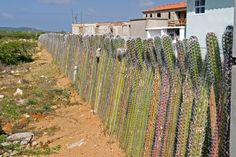 Yeow: Used even in the cities, the cactus fence does not let dogs and foxes pass