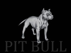 Pitbull Wallpapers Pitbull Black and White Paint