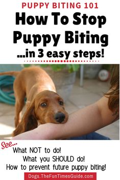 Good news! Your dog will grow out of the nipping and biting phase by the time they reach 7 or 8 months old -- BUT it doesn't happen naturally. It takes a lot of patience and consistent Bite Inhibition Training! Stop Puppy From Biting, Puppy Training Tips, Training Your Dog, Training Collar, Training Pads, Brain Training, Training Equipment, Agility Training, Dog Training