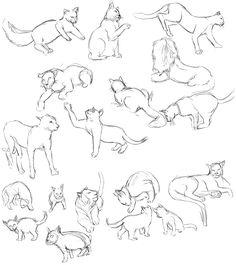 cat anatomy drawing