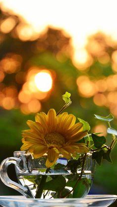朝陽と窓辺のお花