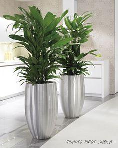 5 ideas para plantear y decorar jardines pequeños Indoor Trees, Indoor Plants, Container Plants, Container Gardening, Indoor Garden, Garden Pots, Garden Sheds, House Plants Decor, Modern Planters