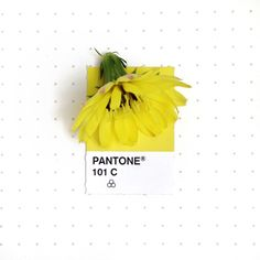 Tiny PMS Match, A Photo Project Featuring Objects Matched to Their Pantone Colors