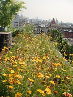 Green Roof Biodiversity