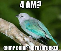 Sometimes I think birds hate me, and they like to talk about it loudly outside my window at 4 AM