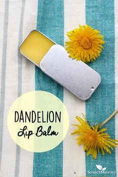 Dandelion Lip Balm Dandelions are versatile medicinal plants packed with vitamins and nourishment. This DIY dandelion lip balm is no exception; it's healing, nourishing and easy to make! Homemade Lip Balm, Diy Lip Balm, Homemade Beauty, Diy Beauty, Face Beauty, Beauty Skin, Beauty Tips, Diy Cosmetic, Dandelion Recipes
