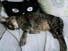 今日の猫(2014/5/14) | Flickr - Photo Sharing!