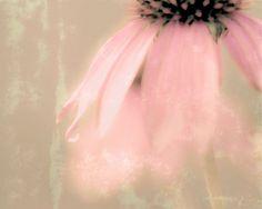Coneflower Memories, Colour photograph (Giclée) by Kala Murie | Artfinder