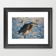heron, blue, beach, florida, bird,