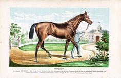 Original Antique Natural History Animal Prints от RarePostCards