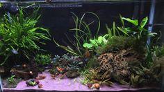 29 gallon low tech tank with plants.
