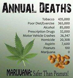 """Cannabis is just way too healthy for a sick health care system""  ― Sebastian Marincolo  #cannabis #marijuana #ganja #weed #facts #health #bud #420 #smokers #stoners #thc #high #pot"