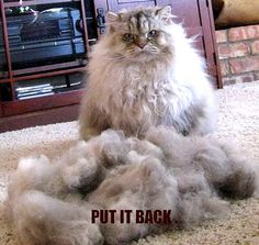 cat funny - animal-humor photo
