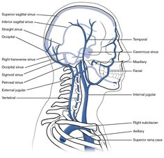veins present in the head and neck.
