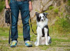 Konzentrationsübungen für den Hund trainieren den Zusammenhalt zwischen Hund und…