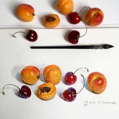 """2,126 Likes, 18 Comments - Елизавета Залегина (@lizalegina) on Instagram: """"Ещё не слишком зрелые #абрикосы и ещё слишком дорогая #черешня , но уже очень хочется ☺️…"""""""