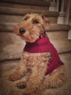 A Ruby Sweater for a Ruby Dog (even though she's so humiliated)