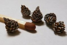 THIS IS CRAZY how to: tiny pinecones