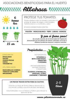 Eco Garden, Home Vegetable Garden, Love Garden, Garden Care, Green Garden, Organic Gardening, Gardening Tips, Spice Garden, Diy Planters