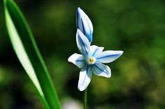 White star - null