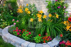 Colorful Flower Bed stock photo - Download garden Royalty Free Images, Search for Free flower Photos