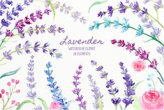 Watercolor Clipart Lavender, sprig of lavender, lavender flowers, blue, pink, purple herb for instant download scrapbook by CornerCroft on Etsy