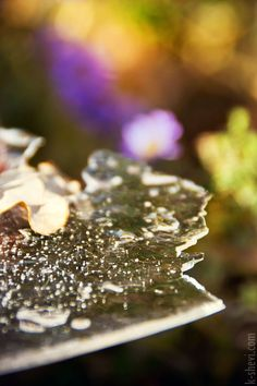 Ice & Flowers by Ekaterina Shevi on 500px