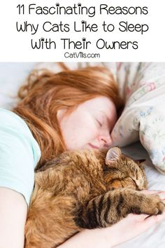 Why do cats like to sleep with their owners? The answers are more intriguing than you might think! Find out what they are! Cat Run, Cat Info, Sleeping Kitten, Owning A Cat, Outdoor Cats, Cat Behavior, All About Cats, Cat Facts, Cat Breeds