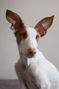 He must be an excellent secret keeper. He's all ears! <3