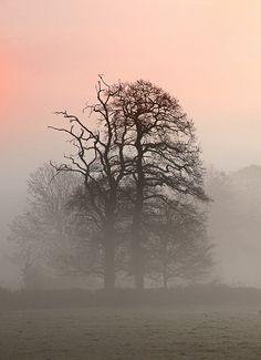 ˚Dawn Sky With Misty Trees - Wales | by Steve Garrington on Flickr