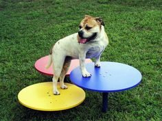 22 best grrls play yard images on pinterest dog dog park and dog stepping up solutioingenieria Gallery