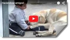 Cool video on the page Heart-warming moment gentle labrador Himalaya coaxed reluctant Down's Syndrome boy who shuns human contact to play with him. Funny Dog Videos, Funny Dogs, Cute Dogs, Dog Love, Puppy Love, Labrador Names, Down Syndrome Kids, Himalaya, Therapy Dogs