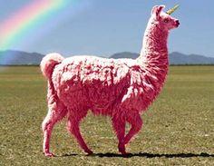 The magical pink llama
